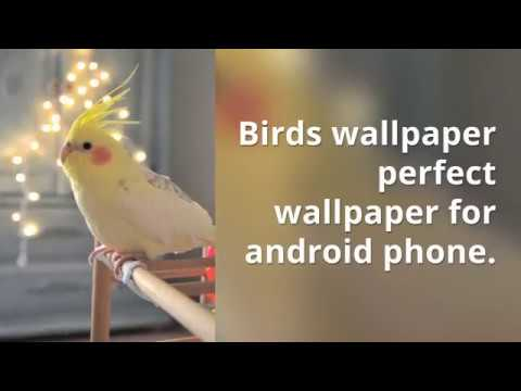 Beautiful Birds Wallpapers Android Apps Beauty Birds Hd