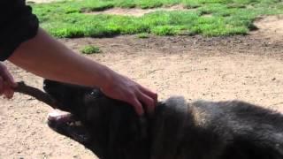 Czech Border Guard Dog Appears In San Francisco.avi