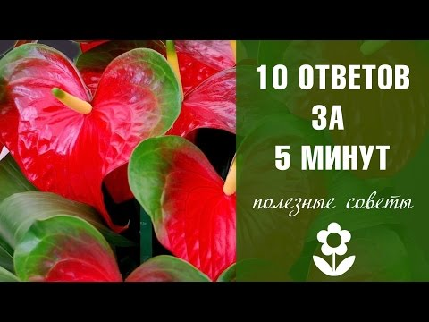 Как часто цветет орхидея?
