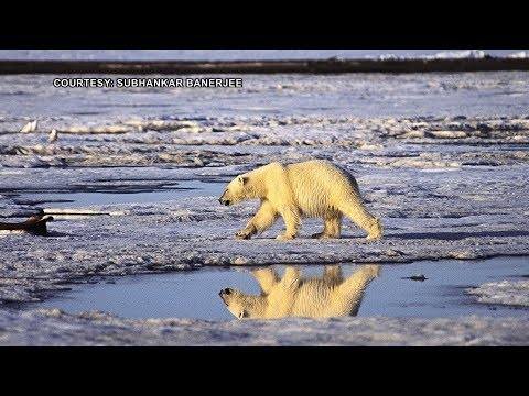 GOP Quietly Moves to Open Arctic Refuge to Oil & Gas Drilling While Earth Undergoes 6th Extinction