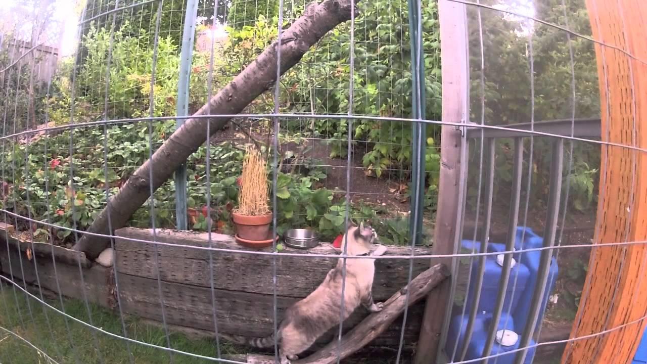 Youtube Cat Enclosure