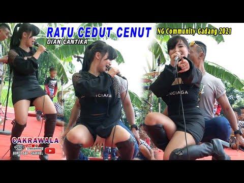 Download DIAN CANTIKA RATU CEDUT CENUT - COFFE DANGDUT - CAKRAWALA THE BEST JANDHUT - NG COMMUNITY 2021