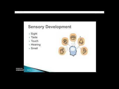 Sensory Development Student PPT