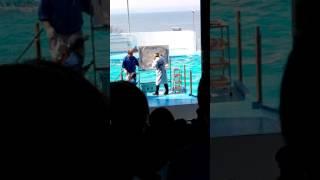 水族館へ行ったらさかなクンが...