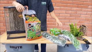 Complete Crested Gecko Setup, Review and Care Info  - LLLReptiles San Diego location!