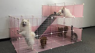 How To Make Play Area For Pomeranian Puppies & Kitten At Home Ideas  DIY Dog Cat House  MR PET #55