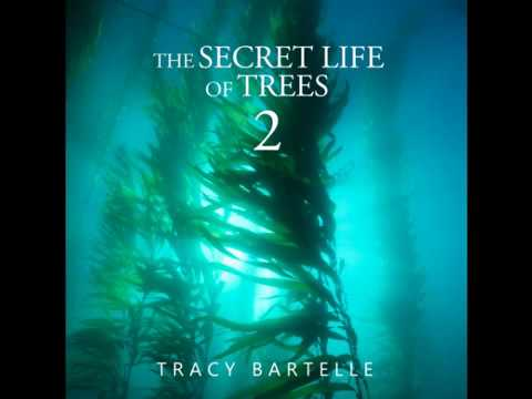 """""""THE SECRET LIFE OF TREES 2 """" RELAX AND CHILL OUT! BY  TRACY BARTELLE.."""