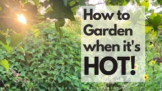 HOT SUMMER GARDEN TIPS to successfully grow a summer garden in HOT climates like ARIZONA