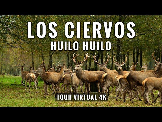 Huilo Huilo Bosque de los Ciervos: 4K Tour Virtual con Música Relajante