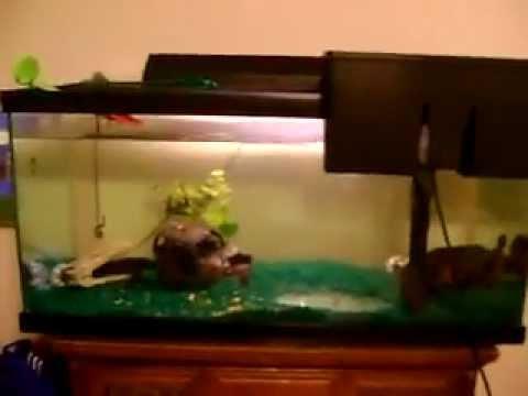 Basic Oscar Fish Tank Setup