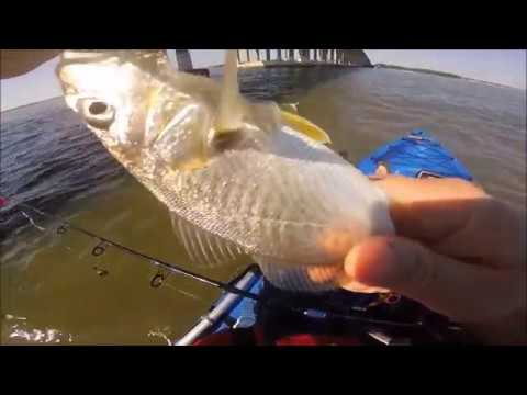 Kayak Fishing In Ocean City Maryland For Croaker.  From FIRST Cast To CAUGHT In 3 Minutes!!