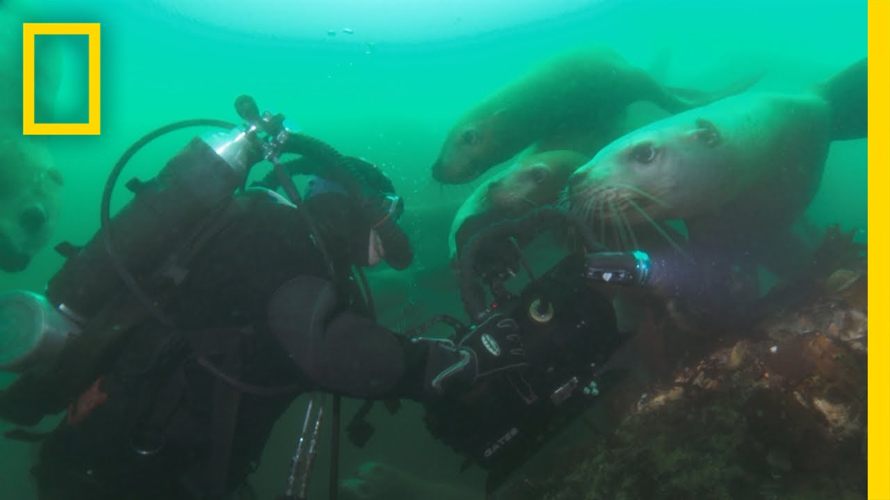 Filming Sea Lions | America's National Parks
