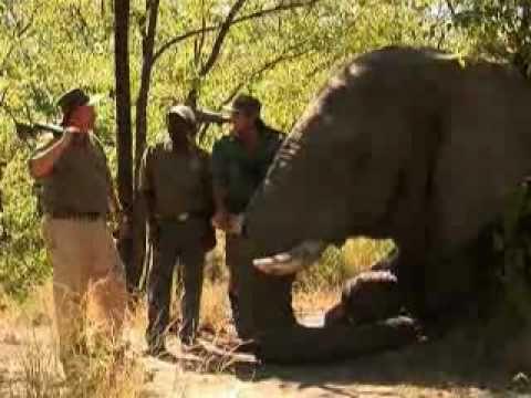 Brad's Elephant Hunt