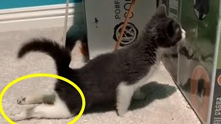 Rescue A Cute Tiny Paralyzed Kitten | Cat Rescue Story