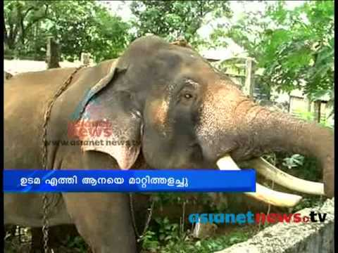 Kollam News: Mahout sleep under the elephat to drink alcohol Chuttuvattom 10thMay 2013 ചുറ്റുവട്ടം