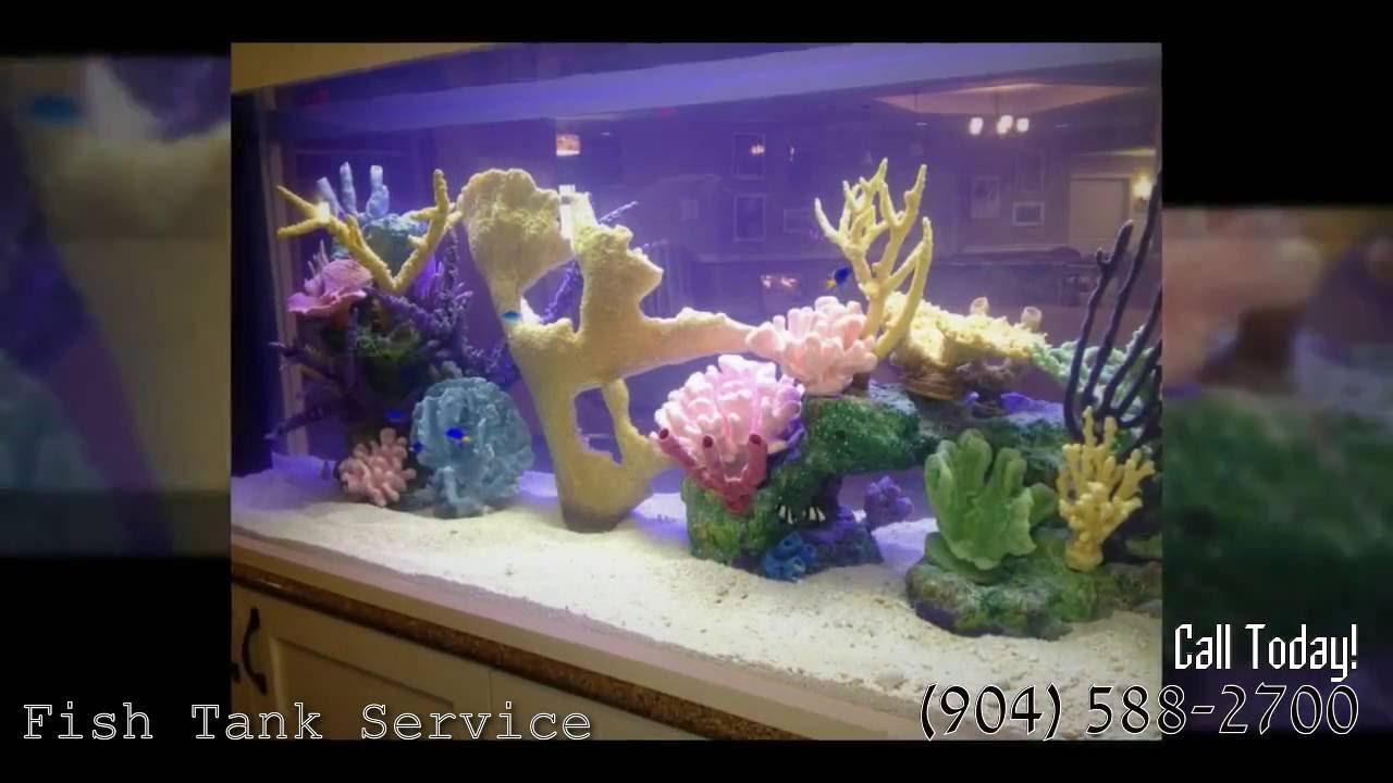 Freshwater aquarium fish jacksonville fl - Fish Aquariums Companies Jacksonville 904 588 2700 Jacksonville Florida