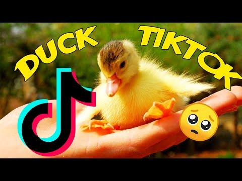DUCK TIKTOK | Duck Side Of TikTok