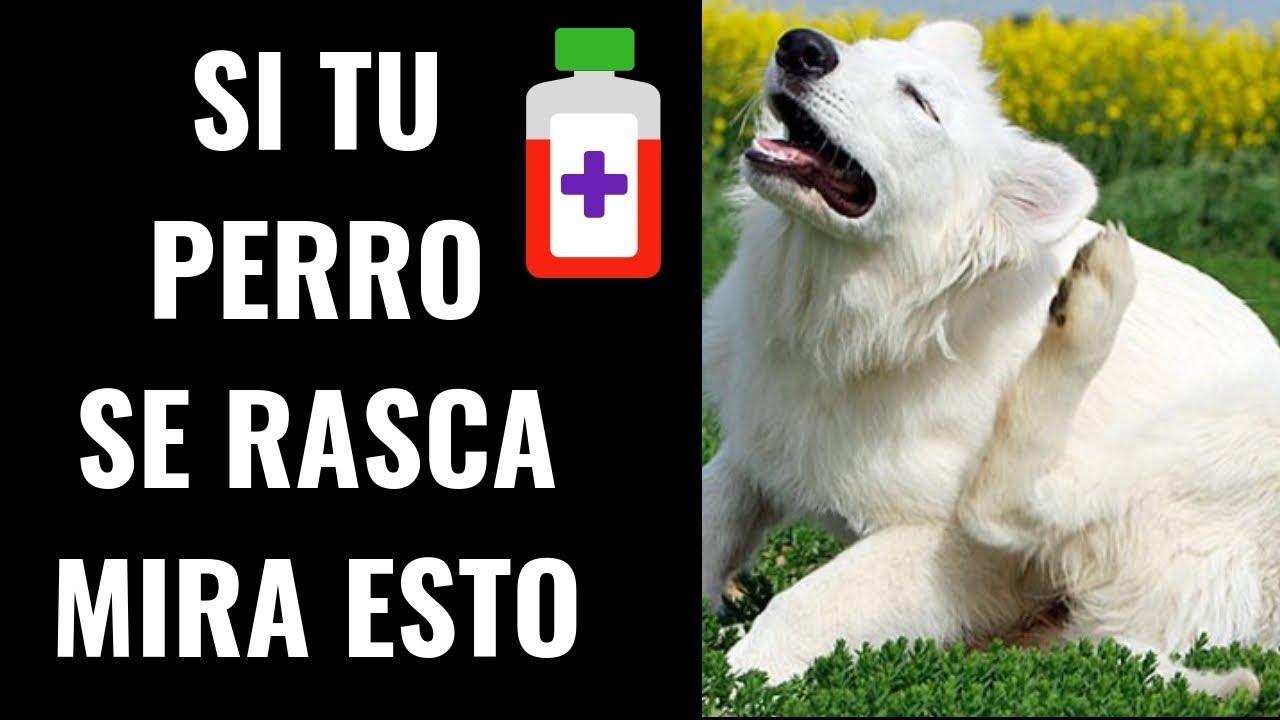 Los de perros la piel en remedios caseros alergias