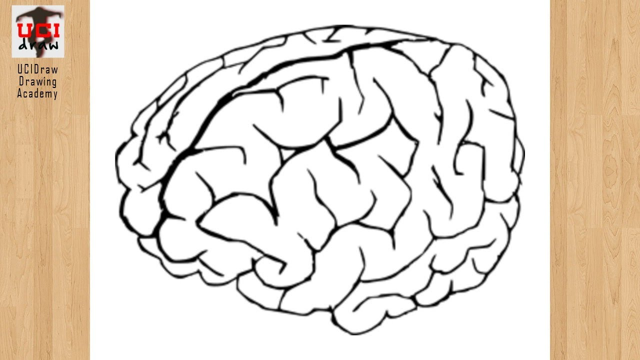 How to Draw a Brain Drawing | Easy Human Brain Outline ...