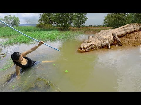 Terrifying! Beautiful Girl Catches Crocodile While Fishing - How To Catch Crocodile In Cambodia