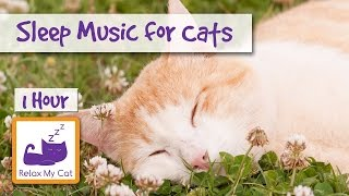 1 Hour of Sleep Music for Cats and Kittens! Relax Your Cat with Music