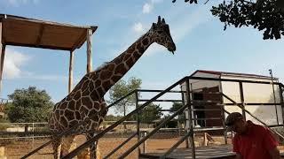 Зоопарк на Кипре Частный зоопарк в Пафосе Pafos Zoo