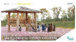 계양꽃마루, 가을꽃의 여왕 코스모스 개장_[2019.8.4주] 영상 썸네일