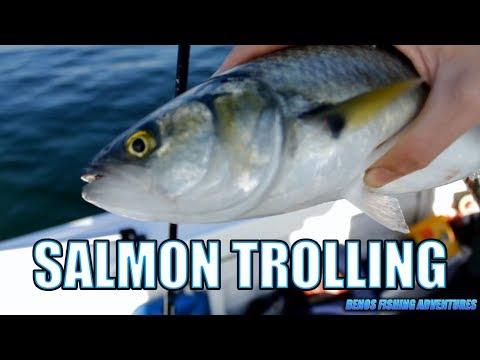 Port Phillip Bay Salmon Trolling
