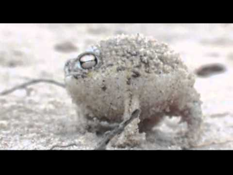 Squeaky Frog Squeaking