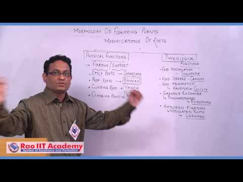Introduction to Roots - NEET AIPMT AIIMS Botany Video Lecture [RAO IIT ACADEMY]