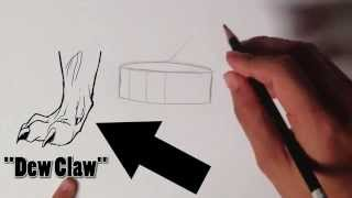 UTM #3 - How to Draw a Dragon Foot