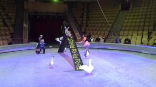 видео Кировский Государственный Цирк