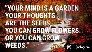 """""""Your mind is a Garden Your Thoughts are the seeds, You can grow flowers or You can grow weeds."""""""