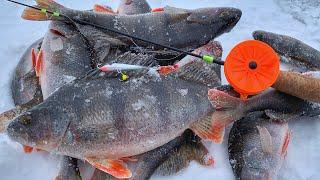 Попал на обед к полосатым Рыбалка 2020 Ловля окуня на балансир Lucky John