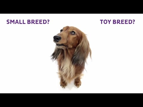 small-breed-&-toy-breed-dog-comparison