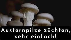 Pilze züchten, sehr einfach!