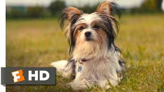 A Dog's Journey (2019) - Boss Dog's Trick Scene (8/10) | Movieclips