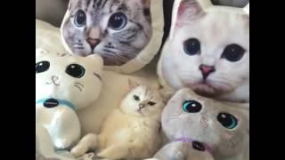 Кот и подушки с котами