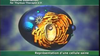 Thérapie au Thymus