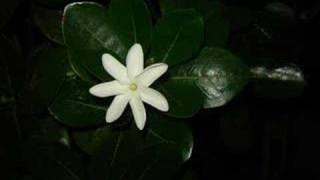 Download Te ava piti - Pahoho Mp3 and Videos