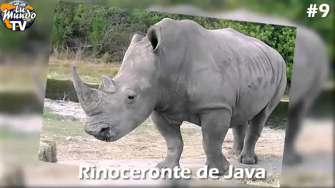 En Peligro De Extinción: 13 Animales En Peligro De Extincion 2016