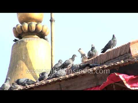 Kala Bhairava temple at the Basantapur Durbar Square complex