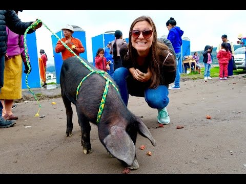 INSANE ANIMAL MARKET | Local Bus to Otavalo, Ecuador