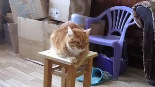 Один день из жизни кота Рыжего. Фильм HD. Смотреть в хорошем качестве.
