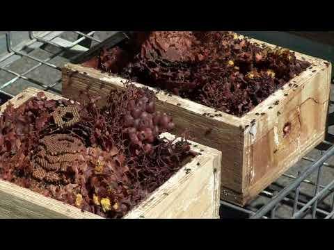 Retrofitting  Australian Native Bee Hives - the new KOATH
