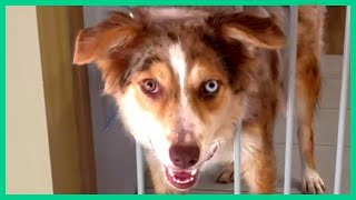 FUNNY DOG VIDEOS FOR YOUR LONG WEEKEND!