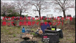 ピコグリルとキャンティーンカップで、お花見デイキャンプ