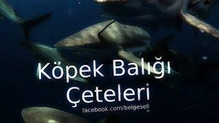 Nat Geo Wild | Köpek Balığı Çeteleri