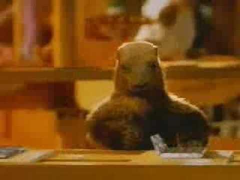 Et la marmotte met le petit chocolat dans le papier d'alu