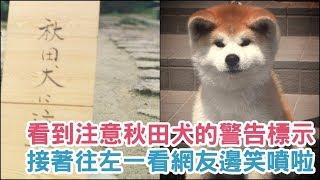 根據推特帳號akitainuho上傳的照片,以及Instagram帳號akiho2502上傳的...